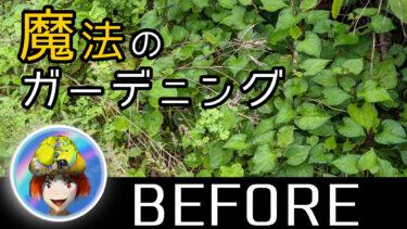 【初日】魔法のガーデニング!荒廃したわが庭にもう一花咲かせてきましたの!?