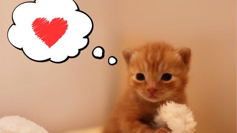 可愛い笑える癒される☆動物の愛らしい仕草001