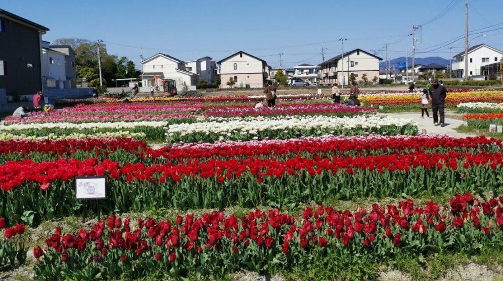 北島チューリップ公園。徳島県。