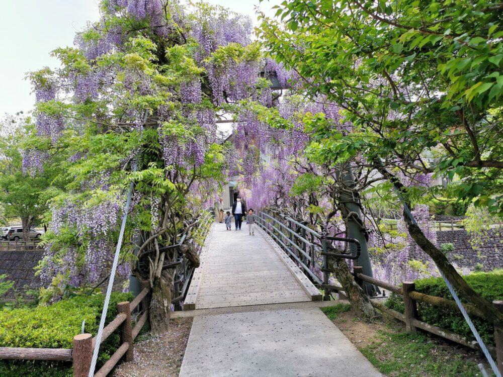 神山町、ふれあい橋。