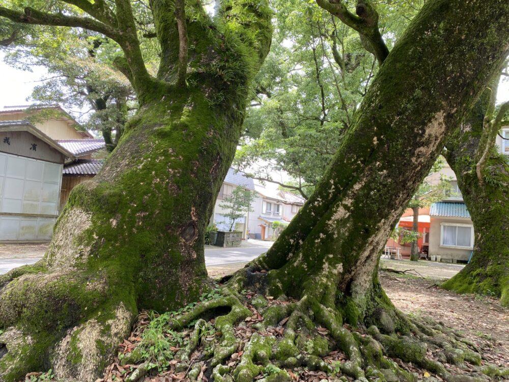 日和佐八幡神社の立派なご神木