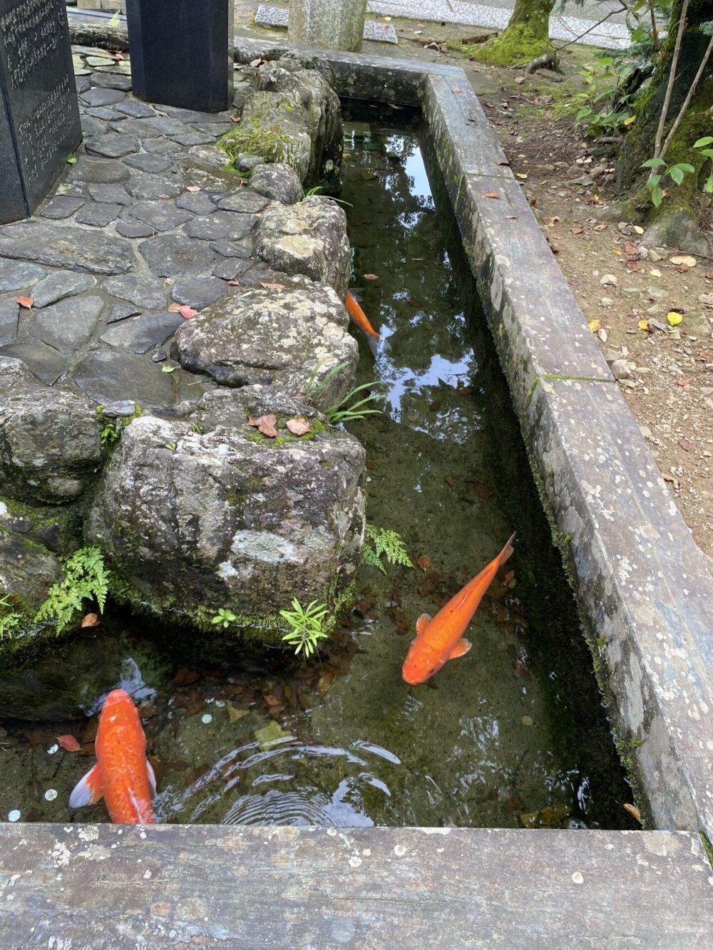 薬王寺。魚籃観音