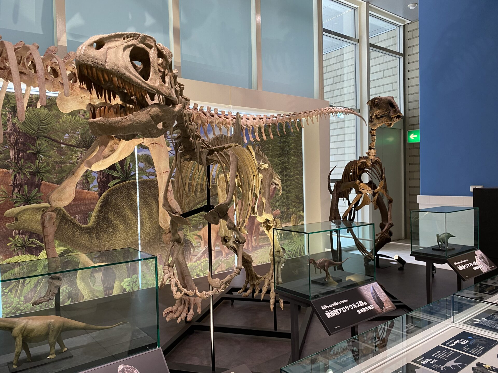 プロバクトロサウルスの化石。撮影ヲヲクラゲ。