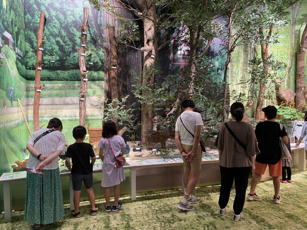 文化の森、常設展