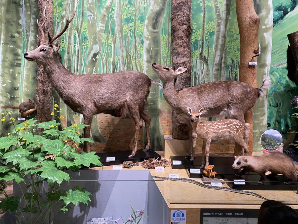 左:ニホンジカ(♂)。右奥:ニホンジカ(♀)。右手前:ニホンジカ(♀・幼獣)