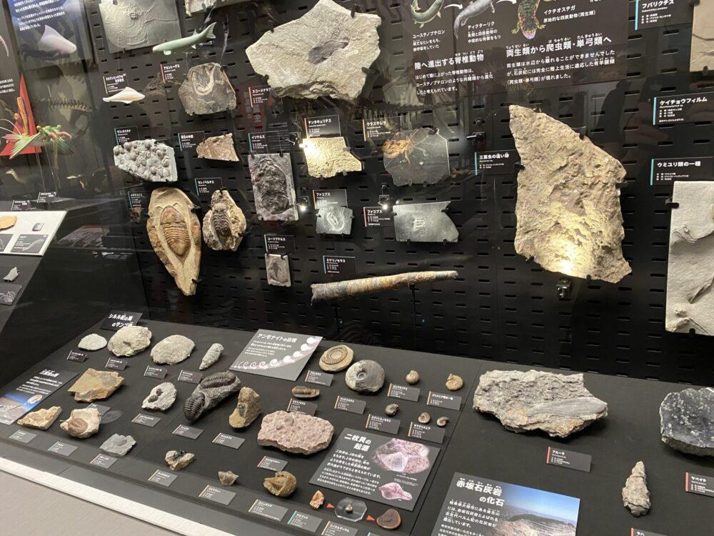 化石的なものが、太古から順に大量に並べられています。
