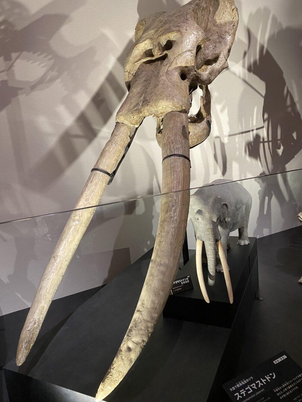 大型で胴長短足のゾウ。ステゴマストドン。