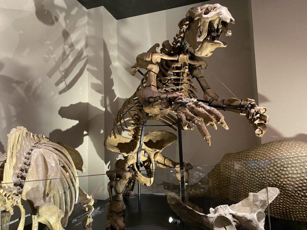 恐竜とよく間違えられます。メガテリウム。