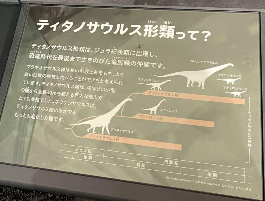 ティタノサウルス形類について。