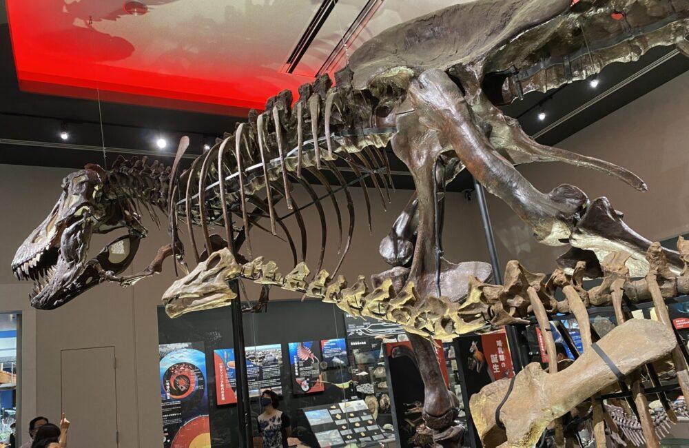 ティラノサウルスを横から。やはり大きいです