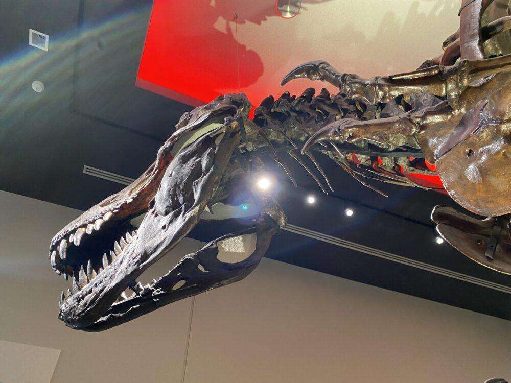 ティラノサウルスの顔。大きいです。