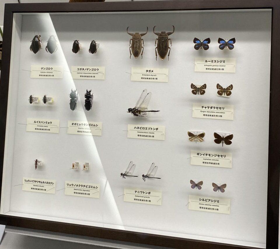 ゲンゴロウは、徳島県内では過去30年近く記録がなく、絶滅した可能性は高い。