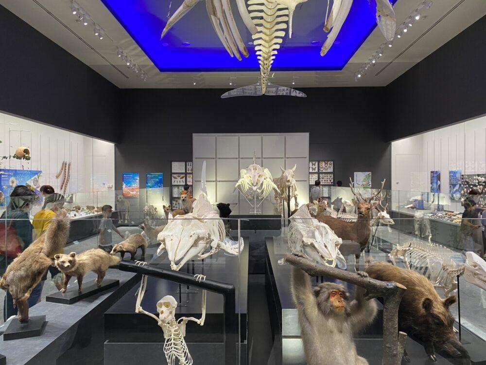 様々な生物・植物が展示されています。